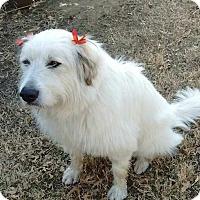 Adopt A Pet :: Fannie - Tulsa, OK