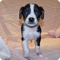 Adopt A Pet :: 17-d02-011 Marita - Fayetteville, TN