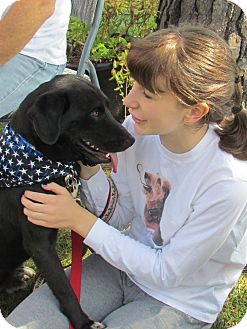 Labrador Retriever Dog for adoption in West Bridgewater, Massachusetts - Prince