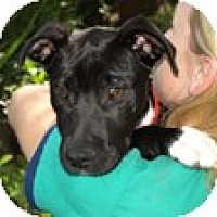 Adopt A Pet :: Frances - Mission Viejo, CA