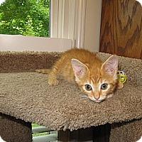 Adopt A Pet :: Mango - Harrisburg, NC
