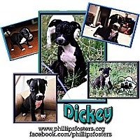 Adopt A Pet :: Dickey - Colleyville, TX