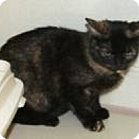 Adopt A Pet :: Allie - West Dundee, IL