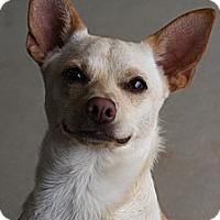 Adopt A Pet :: Sammy - Russellville, KY