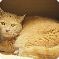 Adopt A Pet :: Mickey - Lincoln, NE