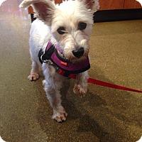 Adopt A Pet :: Delta - Chicago, IL