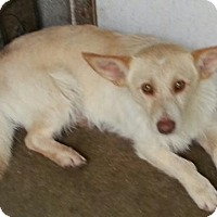 Adopt A Pet :: Sundance - Hagerstown, MD