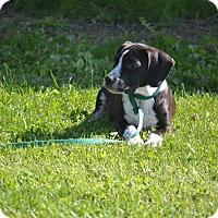 Adopt A Pet :: Baylor - Lake Odessa, MI