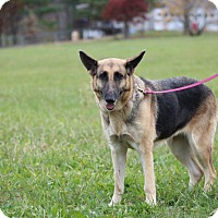 Adopt A Pet :: Danni - Greeneville, TN