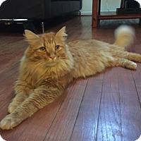 Adopt A Pet :: Rusty- Big Boy! - Arlington, VA