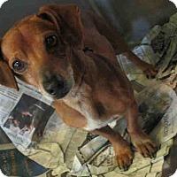 Adopt A Pet :: Hendrix - Encino, CA