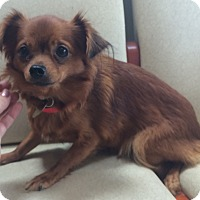 Adopt A Pet :: Bean - Oak Ridge, NJ
