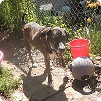 Adopt A Pet :: Otis - House Springs, MO