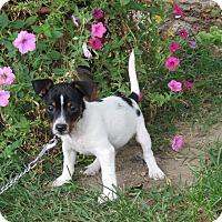 Adopt A Pet :: TANGO - Bedminster, NJ