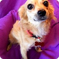 Adopt A Pet :: Taffy - Los Angeles, CA