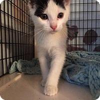 Adopt A Pet :: Eclipse - Ann Arbor, MI