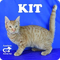 Domestic Shorthair Kitten for adoption in Carencro, Louisiana - Kit