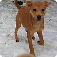 Adopt A Pet :: Mario - Burlington, VT