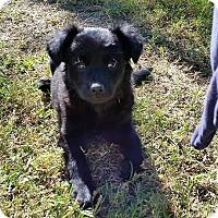 Adopt A Pet :: Alex - Buchanan Dam, TX