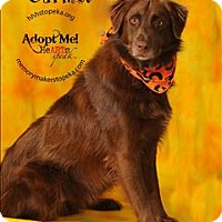 Adopt A Pet :: Carmel - Topeka, KS