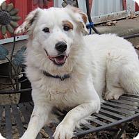 Adopt A Pet :: Koda - Kiowa, OK