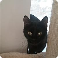 Adopt A Pet :: Ember - Cedar Springs, MI
