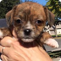 Adopt A Pet :: Carrie#4F - Orlando, FL