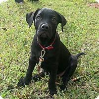 Adopt A Pet :: Ripcord - Royal Palm Beach, FL