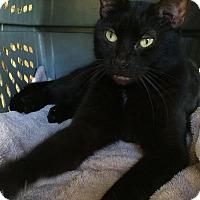 Adopt A Pet :: Sparticus - Odessa, FL