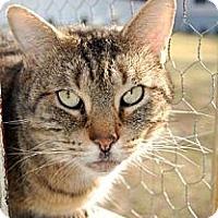 Adopt A Pet :: Moose - River Edge, NJ