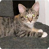 Adopt A Pet :: Karman - Cocoa, FL