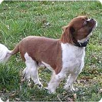 Adopt A Pet :: Saydee - Mocksville, NC