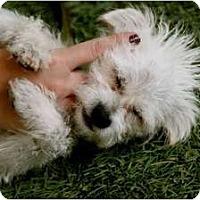 Adopt A Pet :: Kitty - Mission Viejo, CA