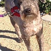 Adopt A Pet :: Mac - Long Beach, CA