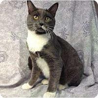 Adopt A Pet :: Steel - Orlando, FL