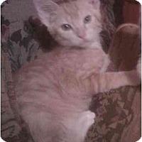 Adopt A Pet :: Tom - Bartlett, TN