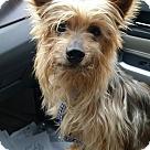 Adopt A Pet :: Barry