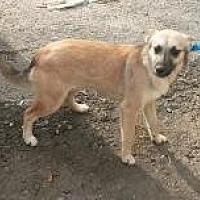 Adopt A Pet :: Lonna - Prestonsburg, KY
