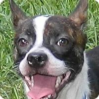Adopt A Pet :: Fitzgerald - Umatilla, FL