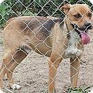 Adopt A Pet :: Tony NO ADOPT FEE - Sherman, CT
