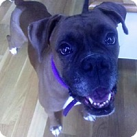 Adopt A Pet :: Sacha - Brentwood, TN
