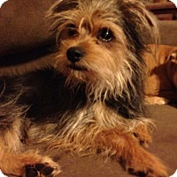 Adopt A Pet :: Artie formerly Twizzler - Las Vegas, NV