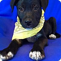 Adopt A Pet :: Batman - Irvine, CA