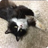 Adopt A Pet :: Tucker - Medina, OH