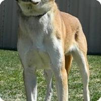 Adopt A Pet :: General - Columbus, NE