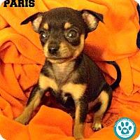 Adopt A Pet :: Paris - Kimberton, PA
