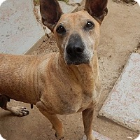 Adopt A Pet :: Aurora - BONITA, CA