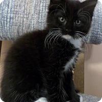 Adopt A Pet :: Peggita - Duluth, GA