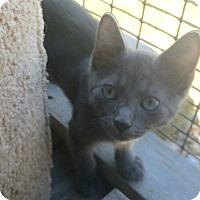 Adopt A Pet :: Sky #4 - Lunenburg, MA