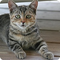 Adopt A Pet :: Ruby - North Fort Myers, FL